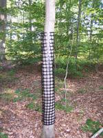 Perforowane osłonki na drzewka